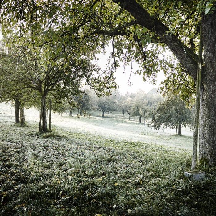 Naturaplan – Bildbearbeitung
